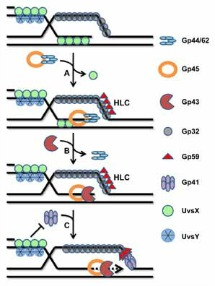 NucAc_Protein_Interactions