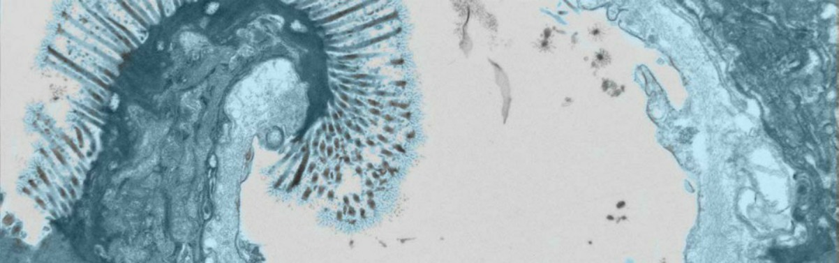 Microscopy Imaging Center College Of Medicine University Of Vermont